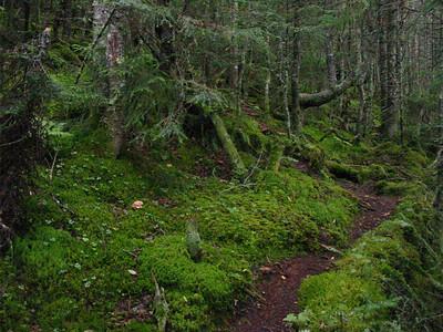 Mossy S. Percy Trail